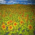 BDXRWD Field of Sunflowers near Hartlepool Tees Valley